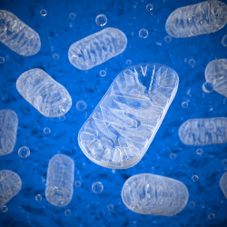 Mitochondrial defects may lead to Autism Spectrum Disorder